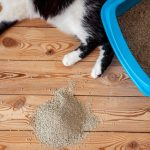 Choosing the Best Litter Box for Your Cat – Top Cleaning Litter Box 2020